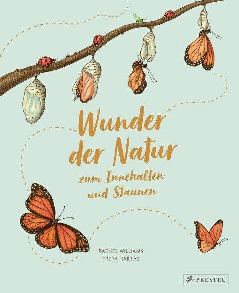 Wunder der Natur zum Innehalten und Staunen - Rachel Williams, Freya Hartas