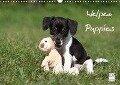 Welpen - Puppies (Wandkalender 2018 DIN A3 quer) - Jeanette Hutfluss