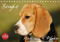 Beagle - Herz auf 4 Pfoten (Tischkalender 2018 DIN A5 quer) - Sigrid Starick