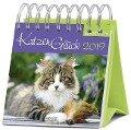 KatzenGlück 2019 -