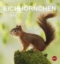 Eichhörnchen 2018 Postkartenkalender -