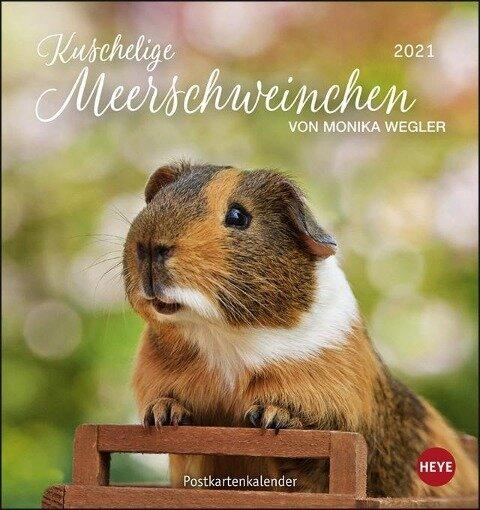 Meerschweinchen 2021. Postkartenkalender -
