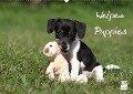 Welpen - Puppies (Wandkalender 2019 DIN A2 quer) - Jeanette Hutfluss