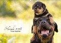 Hunde 2018 - Treue Begleiter (Wandkalender 2018 DIN A2 quer) Dieser erfolgreiche Kalender wurde dieses Jahr mit gleichen Bildern und aktualisiertem Kalendarium wiederveröffentlicht. - Janice Pohle