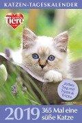 Katzen-Tageskalender 2019 -