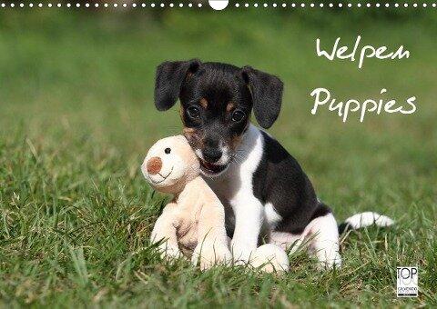 Welpen - Puppies (Wandkalender 2020 DIN A3 quer) - Jeanette Hutfluss