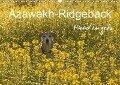 Azawakh-Ridgeback Hund in gelb (Wandkalender 2019 DIN A3 quer) - Meike Bölts