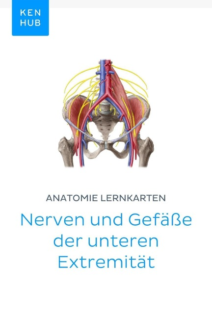 Anatomie Lernkarten: Nerven und Gefäße der unteren Extremität -