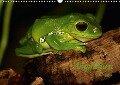 Amphibien (Wandkalender 2018 DIN A3 quer) - Heike Hultsch