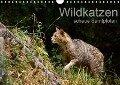 Wildkatzen - scheue Samtpfoten (Wandkalender 2019 DIN A4 quer) - Cloudtail The Snow Leopard