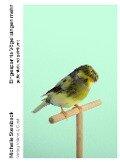 Eingesperrte Vögel singen mehr - Michelle Steinbeck