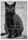Miezekatzen Planungskalender (Wandkalender 2019 DIN A4 hoch) - Hans Zitzler