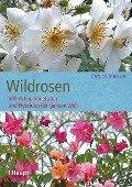 Wildrosen - Patrick Masure