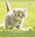 Katzen 2019 Postkartenkalender -