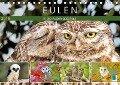 Eulen: In die Augen geschaut (Tischkalender 2018 DIN A5 quer) Dieser erfolgreiche Kalender wurde dieses Jahr mit gleichen Bildern und aktualisiertem Kalendarium wiederveröffentlicht. - K. A. Calvendo