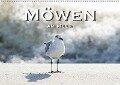 Möwen am Meer (Wandkalender 2018 DIN A2 quer) - Robert Styppa