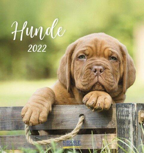 Hunde 2022 -