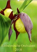 Einheimische Orchideen (Wandkalender 2018 DIN A3 hoch) - Wiltrud Haas