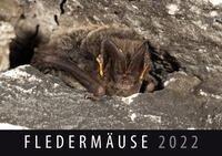 Fledermäuse 2022 -