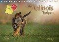 Niedliche Malinois Welpen (Tischkalender 2017 DIN A5 quer) - Martina Wrede