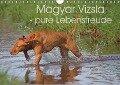 Magyar Vizsla - pure Lebensfreude (Wandkalender 2018 DIN A4 quer) - Barbara Mielewczyk