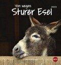 Von wegen sturer Esel 2019. Postkartenkalender -