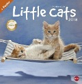 Little Cats Broschurkalender 2018 - Monika Wegler