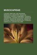Muscicapidae -