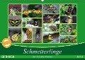 Schmetterlinge der Botanika Bremen (Wandkalender 2018 DIN A2 quer) Dieser erfolgreiche Kalender wurde dieses Jahr mit gleichen Bildern und aktualisiertem Kalendarium wiederveröffentlicht. - Burkhard Körner