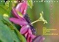 Passiflora (Tischkalender 2018 DIN A5 quer) - k. A. GUGIGEI