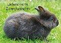 Liebenswerte Zwergkaninchen (Wandkalender 2018 DIN A3 quer) - k. A. kattobello
