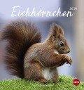 Eichhörnchen 2019 Postkartenkalender -