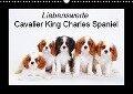 Liebenswerte Cavalier King Charles Spaniel (Wandkalender 2018 DIN A3 quer) - Petra Wegner