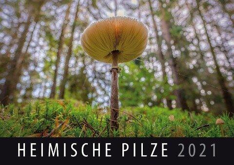 Heimische Pilze 2021 -