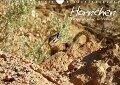 Hörnchen - neugierig, putzig, liebenswert (Wandkalender 2017 DIN A4 quer) - Jana Thiem-Eberitsch
