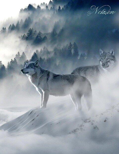 Fantasy Notizbuch: Wölfe im Nebel - weiße Seiten mit Eckmotiv - Samuriel Sternenfeuer