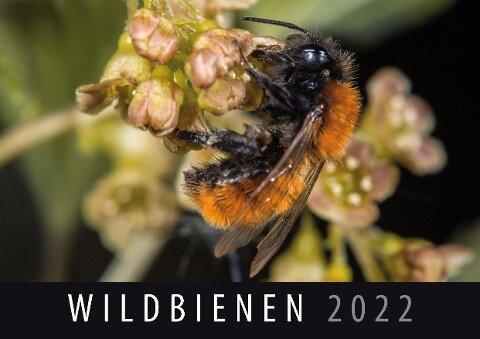 Wildbienen 2022 -