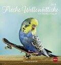 Freche Wellensittiche 2019. Postkartenkalender -