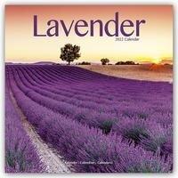 Lavender - Lavendel 2022 -