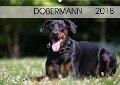 Dobermann 2018 (Wandkalender 2018 DIN A2 quer) - Annett Mirsberger Www. Tierpfoto. De