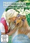 Harmonisches Hundetraining: Basisübungen und Tricks - Ute Kordt