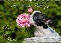 Französische Bulldogge - Clown auf 4 Pfoten (Wandkalender 2018 DIN A3 quer) Dieser erfolgreiche Kalender wurde dieses Jahr mit gleichen Bildern und aktualisiertem Kalendarium wiederveröffentlicht. - Sigrid Starick