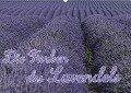 Die Farbe des Lavendels (Wandkalender 2019 DIN A2 quer) - Ralf-Udo Thiele