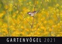 Gartenvögel 2021 -