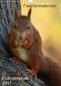 Eichhörnchen (Wandkalender 2017 DIN A4 hoch) - SchnelleWelten