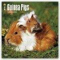 Guinea Pigs 2018 Wall Calendar -