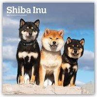 Shiba Inu 2021 Square - Browntrout