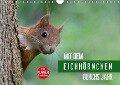 Mit dem Eichhörnchen durchs Jahr (Wandkalender 2019 DIN A4 quer) - Margret Brackhan