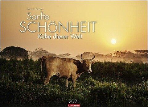 Sanfte Schönheit - Kühe dieser Welt Kalender 2020