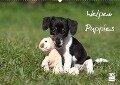 Welpen - Puppies (Wandkalender 2017 DIN A2 quer) - Jeanette Hutfluss